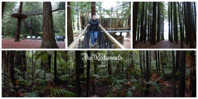 Redwoods collage